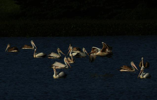 lakes-bangalore