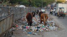 Jaipur-waste-management