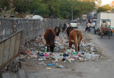 Jaipur-waste-management