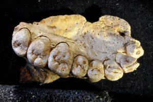 fossil israel
