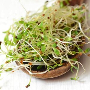 Alfalfa sprouts are very low in calories but rich in nutrients